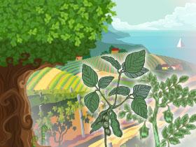 扁豆的故事