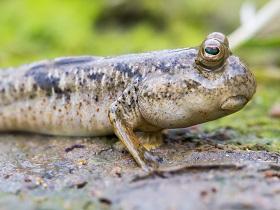 生物多樣性與保育